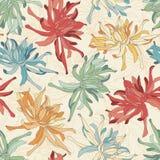 Chrysanthemum Royalty Free Stock Photos