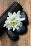 Chrysanthemum with zen stone Royalty Free Stock Photos