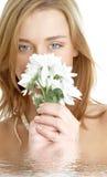 chrysanthemumflickawhite royaltyfri fotografi