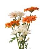 chrysanthemumfragment Arkivbild