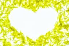 chrysanthemumpetals royaltyfria foton