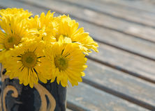 Chrysanthemums Stock Images