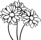Chrysanthemums. Line Art Illustration of Chrysanthemums Royalty Free Stock Images