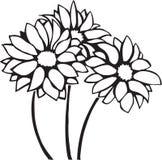 Chrysanthemums. Line Art Illustration of Chrysanthemums vector illustration