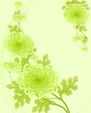 Chrysanthemums. Floral design. Vector illustration Royalty Free Stock Images