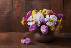 chrysanthemums Image stock