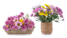 Chrysanthemums in basket. On white background Stock Photo