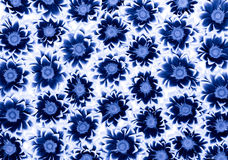 Chrysanthemums bleus Photo libre de droits