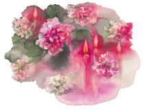 Chrysanthemums candles isolated. Chrysanthemums with candles isolated watercolor christmas card full Stock Photo