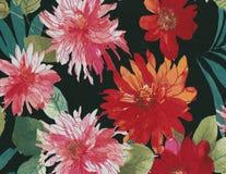 Chrysanthemums, dalhias background. Royalty Free Stock Images