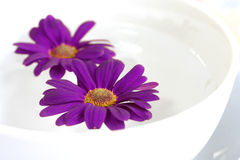 Chrysanthemums floating in a bowl of water Stock Photography