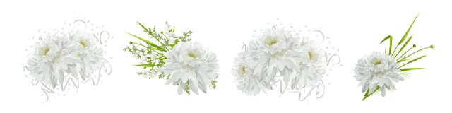 Chrysanthemums. Floral compositions with flowers, leaves. stock illustration