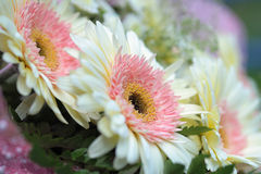 Flower closeup. A macro photo of a chrysanthemums flower Royalty Free Stock Images