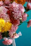 Chrysanthemums flower Stock Photo