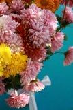 Chrysanthemums flower Stock Photo
