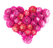 Chrysanthemums flowers heart. Isolated on a white background Stock Photo