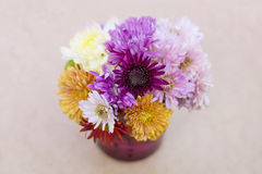 Chrysanthemums flowers in purple glass vase Stock Photos