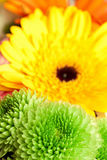 Chrysanthemums and gerberas Royalty Free Stock Images