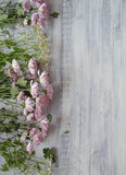 Chrysanthemums on a rustic wooden background royalty free stock photo