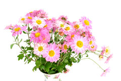 Chrysanthemums (in vase) Stock Images