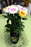 Chrysanthemums in vase Royalty Free Stock Images