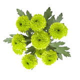 Chrysanthemums verts Photo libre de droits