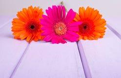 Chrysanthemums on violet planks Stock Photography