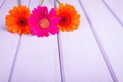 Chrysanthemums on violet planks Royalty Free Stock Photo