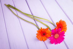 Chrysanthemums on violet planks Royalty Free Stock Images