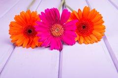Chrysanthemums on violet planks Royalty Free Stock Image