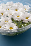 Chrysanthemums in water Royalty Free Stock Images