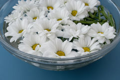 Chrysanthemums in water Stock Photo
