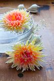 Chrysanthemums in water Stock Photo