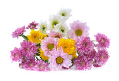 Chrysanthemums Royalty Free Stock Images