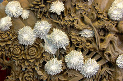 chrysanthemumsten Royaltyfria Bilder