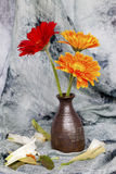 Chrysanthmum in un vaso Immagine Stock