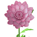 Chrysanths. Chrysanthemums, sometimes called mums or chrysanths, are flowering plants of the genus Chrysanthemum in the family Asteraceae. They are native to Stock Image