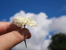 Chryzantema herbaciany kwiat 04 Zdjęcia Royalty Free