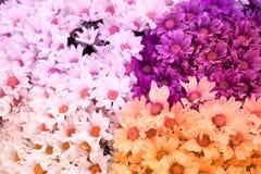 Chryzantema kwiat jest słodkim miękka część stylu abstrakta tłem Zdjęcia Stock