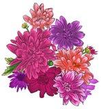 Chryzantema kwiatu bukiet odizolowywający gradientowy illusrtation żadna napoju miłosny wektoru czarownica Zdjęcia Royalty Free