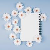 Chryzantema kwiaty Obraz Stock