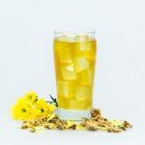 Chryzantemy herbata Zdjęcie Royalty Free