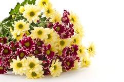 chryzantemy kolor żółty Zdjęcia Royalty Free