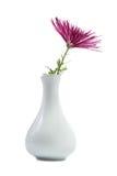 chryzantemy purpur waza Zdjęcia Stock
