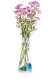Chryzantemy różowy zbliżenie. Obrazy Stock