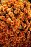 Chryzantemy są cmentarnianymi kwiatami fotografia royalty free