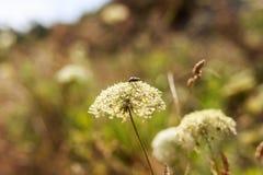 Chrząszcz na ostrzu trawa w lesie fotografia royalty free