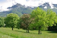 Châtaigne-arbres de cheval Photos stock