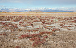 Chu steppe Royalty Free Stock Images