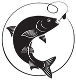 Chub fish. The picture shows a flock of chub fish Stock Images